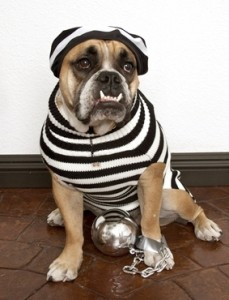 Dog in Veterinary Hospital Website SEO Jail