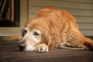 Pets are living longer, creating many opportunities to distinguish your practice as an expert in their care and comfort.