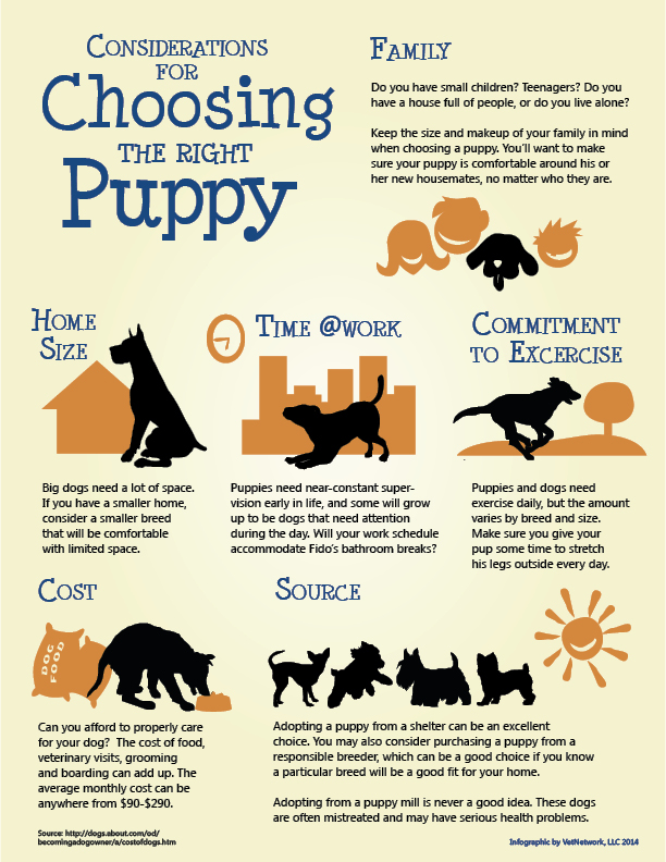 Veterinary Infographics Marketing Infographic For Veterinarians