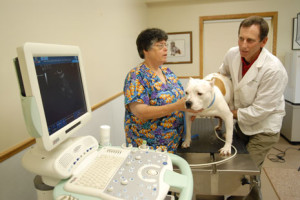 using veterinary referral hospitals are good for your practice