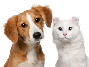 Get the Attention that Leads to Veterinary Hospital Success