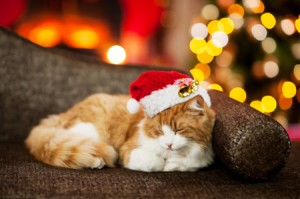 holiday_cat