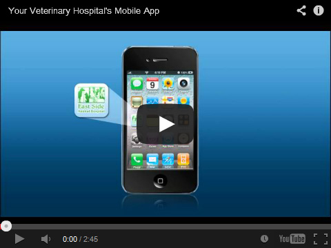 veterinary app video