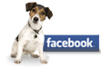 Harness the Power of Facebook