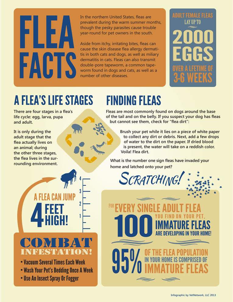Veterinary Infographics Marketing Infographic For