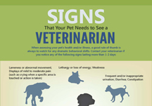 veterinary infographic
